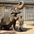 Cviceniu sloniu.ZOO w Libercu. #Słoń #ZOO #Liberec