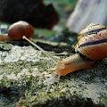 ślimaki #ślimaki #przyroda