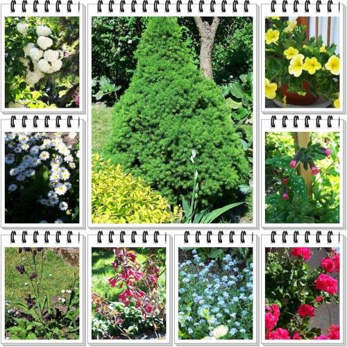 Ogród 2009