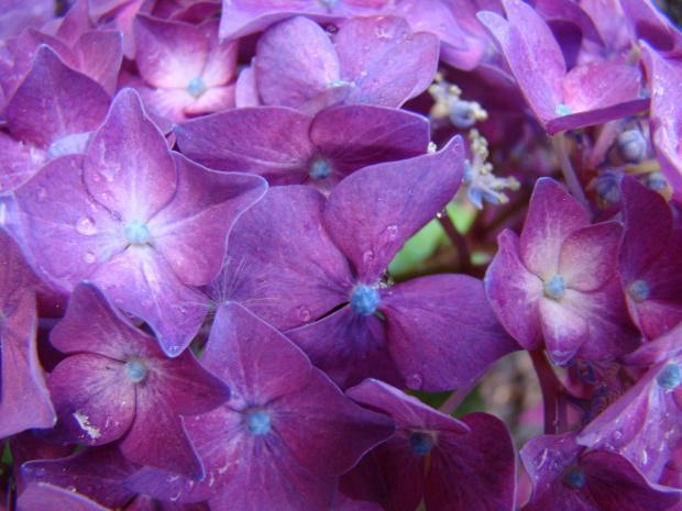 Skropione deszczem. #kwiaty