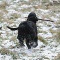 Z patykiem. #boisko #Luna #łąka #pies #śnieg #zima