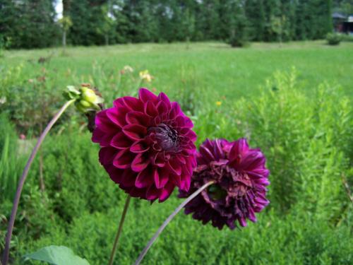 #Kwiat #lato #zwierzęta #owad #przyroda
