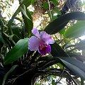 palmiarnia poznan #rosliny