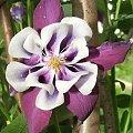 #kwiat #kwiaty #flora #rośliny #piękne #jaba #jaba55