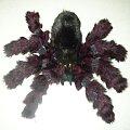 #pająk #ptasznik #maskotka #pluszak