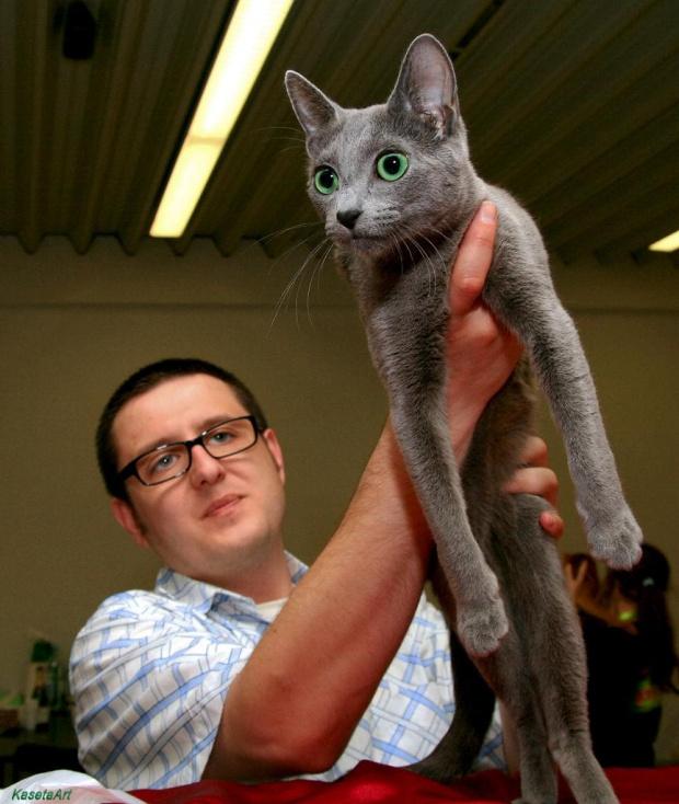 Kot Rosyjski Niebieski #Kot