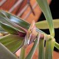 rośliny #rosliny
