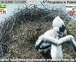 http://images40.fotosik.pl/141/685411de7409aeb4m.jpg