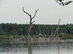 images40.fotosik.pl/142/a7cb2ee0b01df1aam.jpg