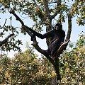 #małpa