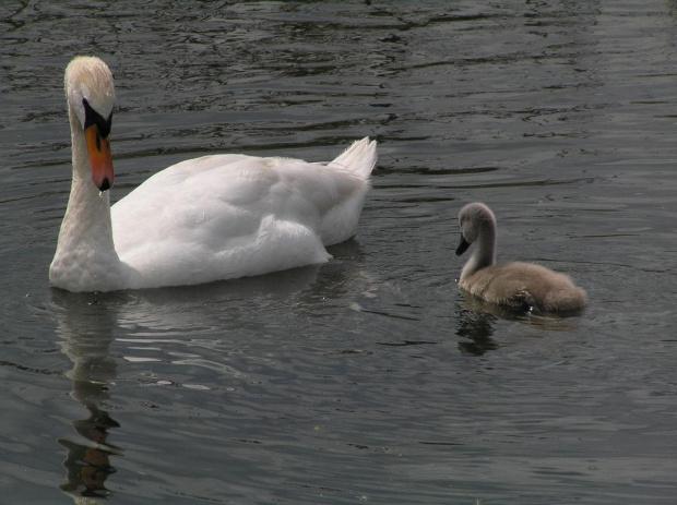 Nad rzeka Lea #Anglia #rzeka #Lea #widoki #zwierzeta