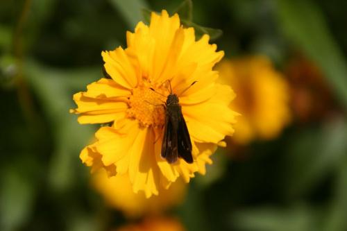 #kwiaty #przyroda