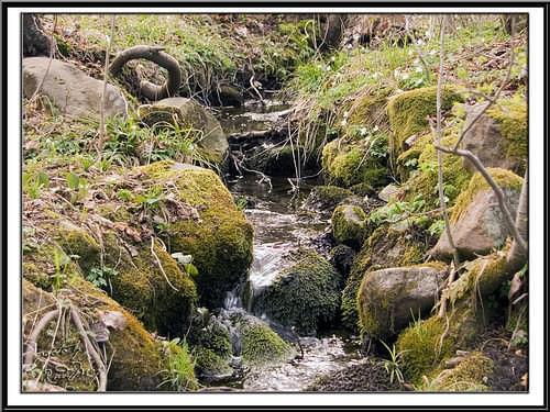 gdzie strumyk płynie z wolna #Polanica #strumyk #góry
