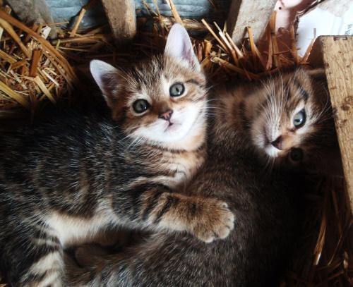 #koty #zwierzeta #sloma