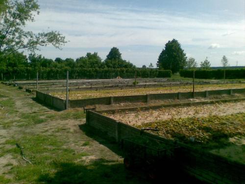 Wiosna na szkółce leśnej Viridis Pasztowa Wola Kolonia #szkółka #leśna #sadzonki #leśne #producent #zadrzewienia #zadrzewień #podkładka #zalesień #odnowień
