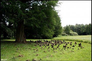 Arbotreum w Kórniku - to wystające z ziemi to korzenie tego drzewa:)