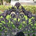 Ogrodzenie pomnika #ogrodzenie #wzór #ornament