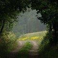 #las #drzewa #rośliny #przyroda #natura #lato #deszcz #droga #brama