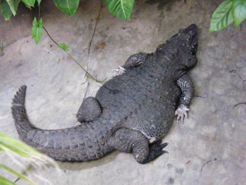 Czyste ręce :) #aligator