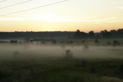 #mgła #las #WschódSłońca #sosna