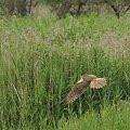#ptaki #drapieżnik #PtakiDrapieżne