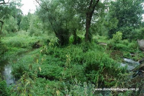 #korczew #bużyska #drohiczyn #olendry #drażniew #RzekaBug #PodlaskiPrzełomBugu