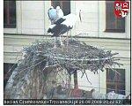 http://images40.fotosik.pl/179/fa8e4ef9185962b5m.jpg