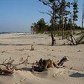 Są takie miejsca, gdzie czas się zatrzymał... #Wyspa #GórkiWschodnie #NadMorzem #sztorm #plaża #sosny #widok
