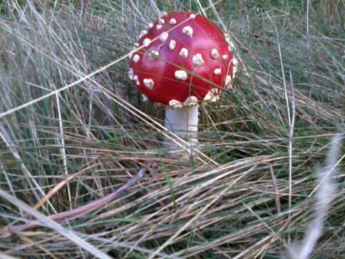http://images40.fotosik.pl/1816/af4cec038697b432med.jpg