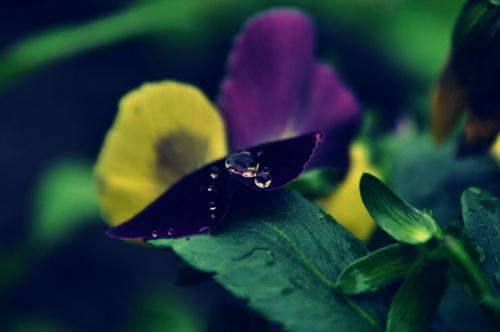 Crystal #KwiatKropla