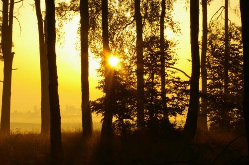 Wschód słońca #las #jesień #poranek