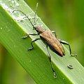 żuczek ;D #makro #owad #chrząszcz