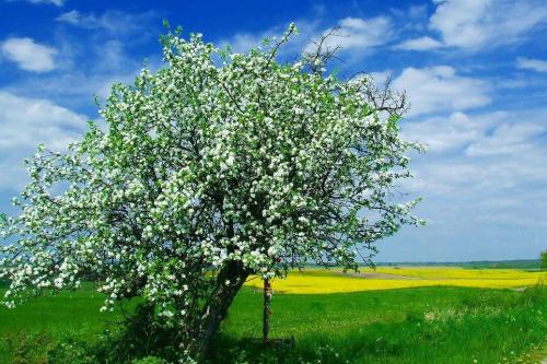 Wiosna #WiosnaJabłońKrajobraz