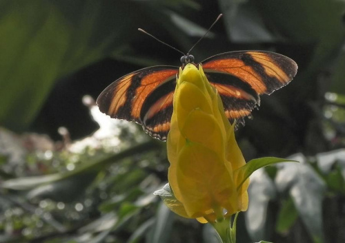 Pobawmy sie w chowanego...:) #evasaltarski #motyl #owad