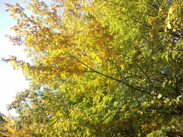 jesień po szpitalem PCK w Gdyni