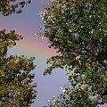 Na dobry tydzień:) #tęcza #niebo #drzewa