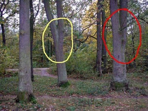 http://images40.fotosik.pl/209/0a10143c1c168622med.jpg