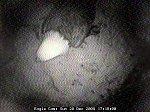 http://images40.fotosik.pl/236/c68528df6bdd7dc0m.jpg