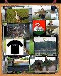images40.fotosik.pl/247/e27de9a80eca2b9em.jpg