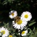 #pająki #motyle #muchy #pszczoły #owady #makro #makrofotografia #pajęczyny