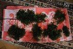 images40.fotosik.pl/268/9563cbfe7ed3bd7em.jpg
