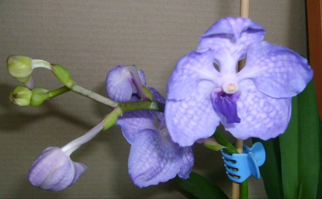 Vanda Golamco's Blue Magic 87ca2568a0a1ad48