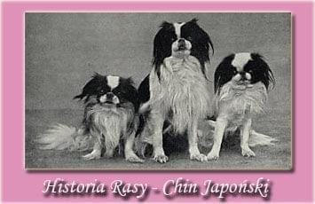 historia rasy , historia rasy chin japoński , historia rasy japan chin