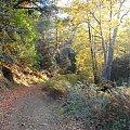 Cypr-Dolina Cedrów #droga #las #jesień #kolory #złote #piękne
