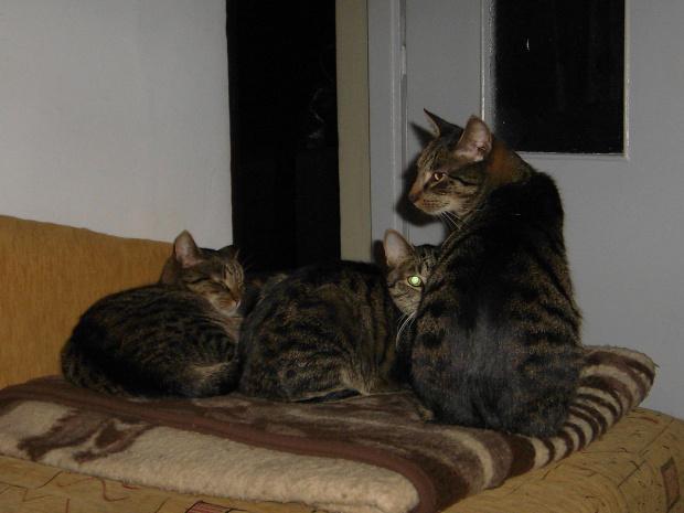 Od lewej: Pusia, Duszek i Filip