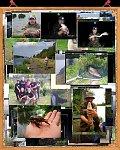 images40.fotosik.pl/323/79ae418b1937ecabm.jpg
