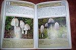 images40.fotosik.pl/365/998158eb21d5990cm.jpg