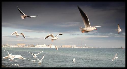 Gdynia #Gdynia #morze #trójmiasto