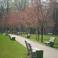 #drzewa #ławki #park #droga #chodnik #wiosna #słońce