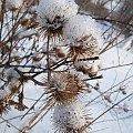 Zimowe kwiaty:) #zima #rośliny #chwasty #gwiazdki #śnieg